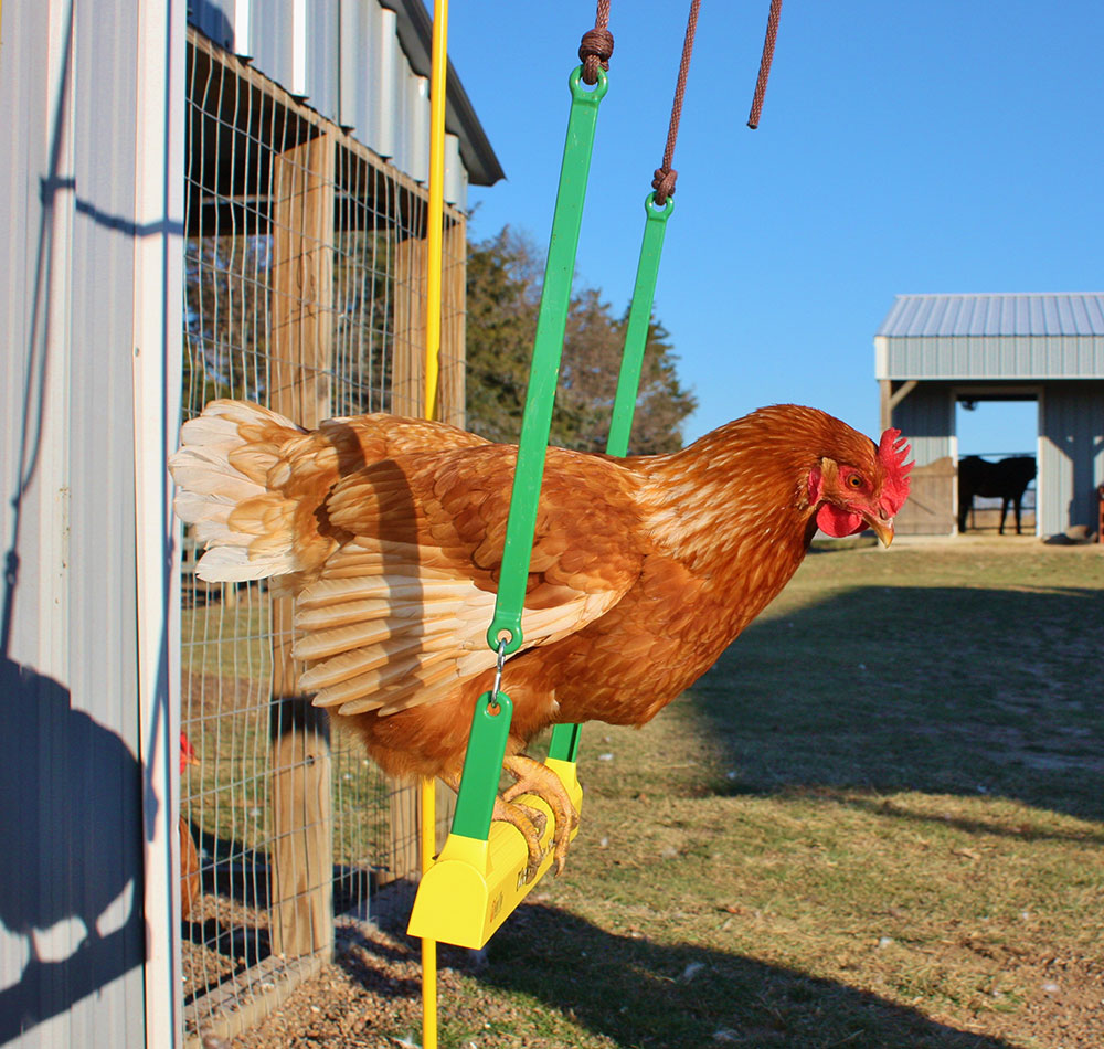 chicken swing swings chickens pet animals poultry toys mypetchicken toy cacklehatchery gifts hatchery fowl really enlarge any